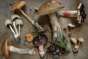 Zbiór grzybów